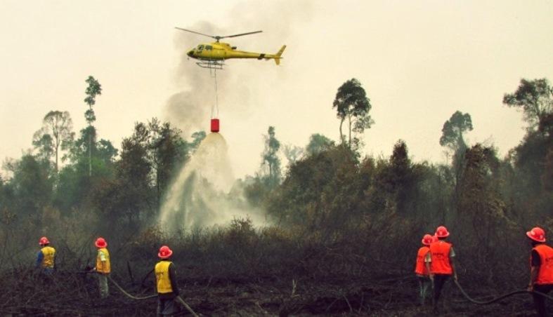 Kebakaran di Riau