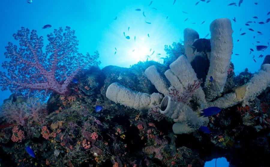 Kehidupan di bawah laut | Foto: Digaleri.com