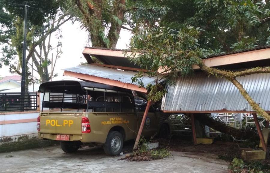 Pohon tumbang Satpol PP RL