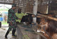 TNI Pendam V Brawijaya