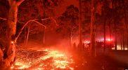 Kebakaran hutan di australia