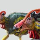 Ilustrasi Institut Antropologi dan Sejarah Nasional Meksiko (INAH) menggambarkan spesies baru dinosaurus bernama Tlatolophus galorum setelah ahli paleontologi menemukan sisa-sisa fosil berusia 72 juta tahun hampir satu dekade lalu, di General Cepeda, Coah