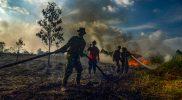 Penghentian Moratorium Sawit Mengancam Kelangsungan Hutan — BeritaBenar